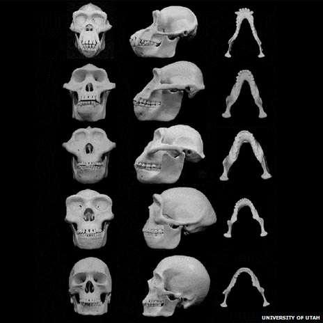 Los puñetazos marcaron la evolución del rostro masculino 140609114429huesosskullsblackbg